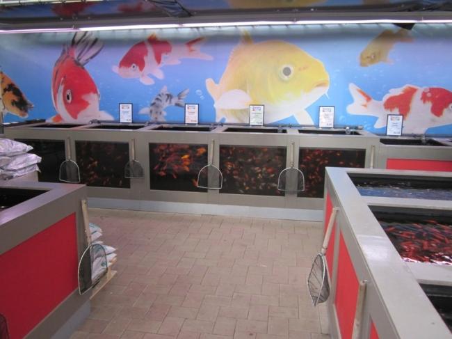 Aquarium fische produktpalette tuincentrum dani ls for Was brauchen goldfische im teich